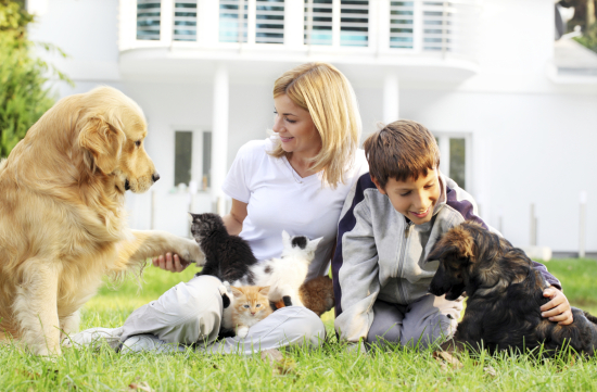 Moving Strategies for Pets