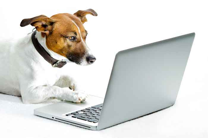 Pet Profiles and How to find a Pet Online