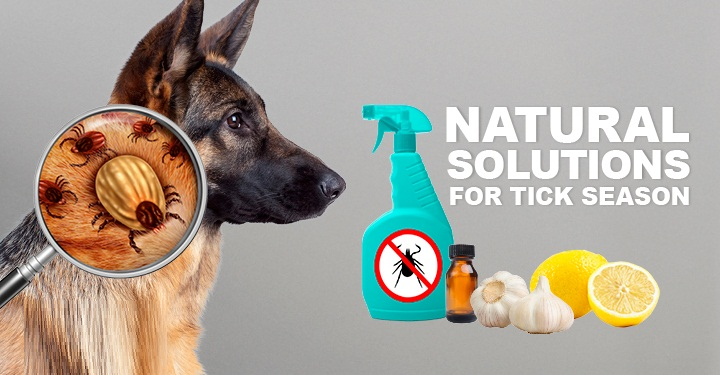 Natural Home Remedies For Pets