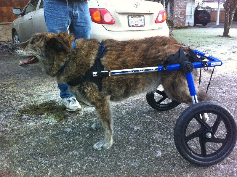Pets Need Mobility
