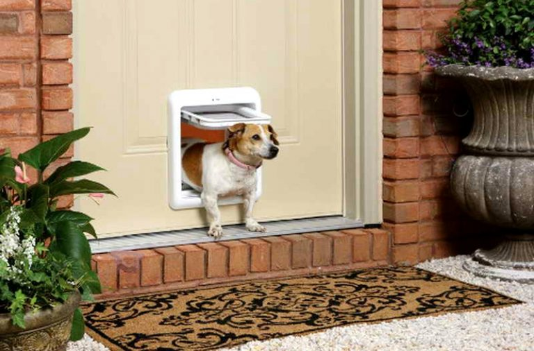 Is a Magnetic Door the Right Fit for Your Furry Friend?