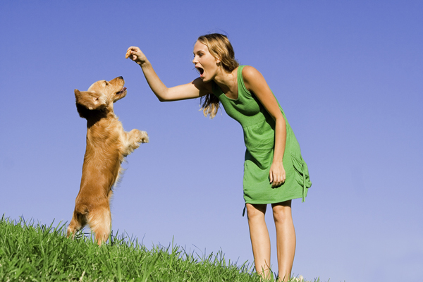 9 Essential Puppy Training Tips for New Pet Owners