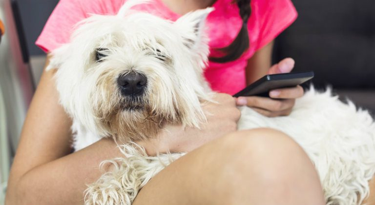 Do You Have Your Pet's Health Adequately Covered?