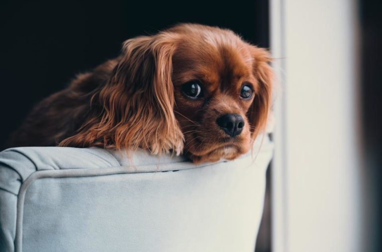 How You Can Provide a Comfortable Home for Your Puppy